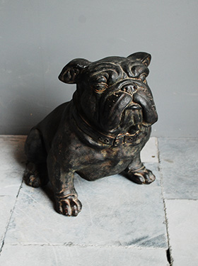 Bulldog Chehoma