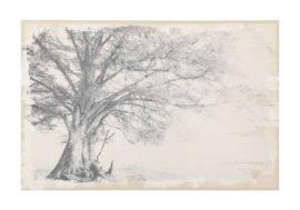 Tableau Arbora Sépia